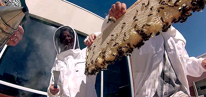photo of students with bees