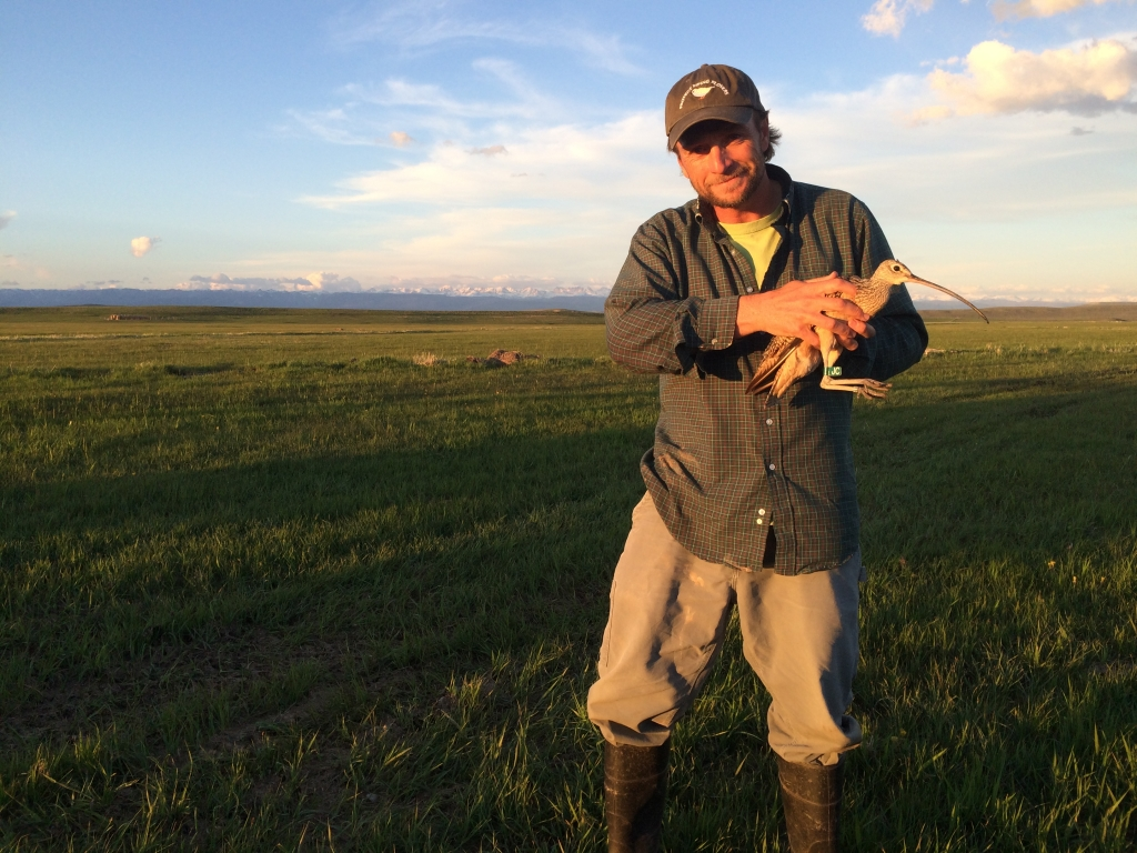 """Here I am with more curlew poop and the last curlew of the 2015 season, """"JC""""; Daniel, WY"""