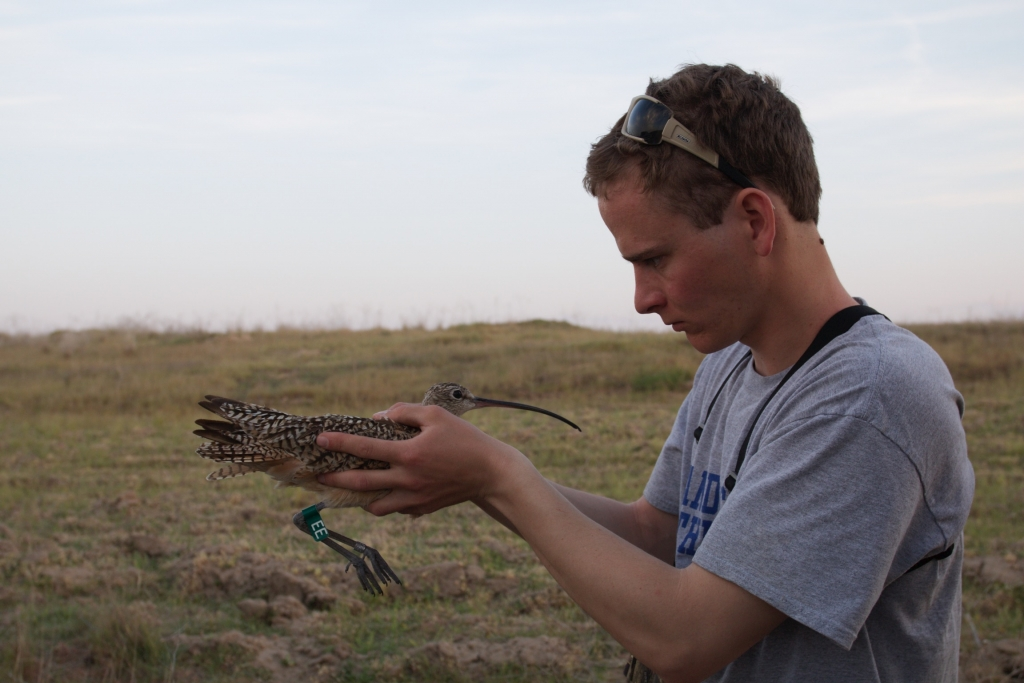 All-star curlew technician, Ben Wright. Photo by Leith Edgar.
