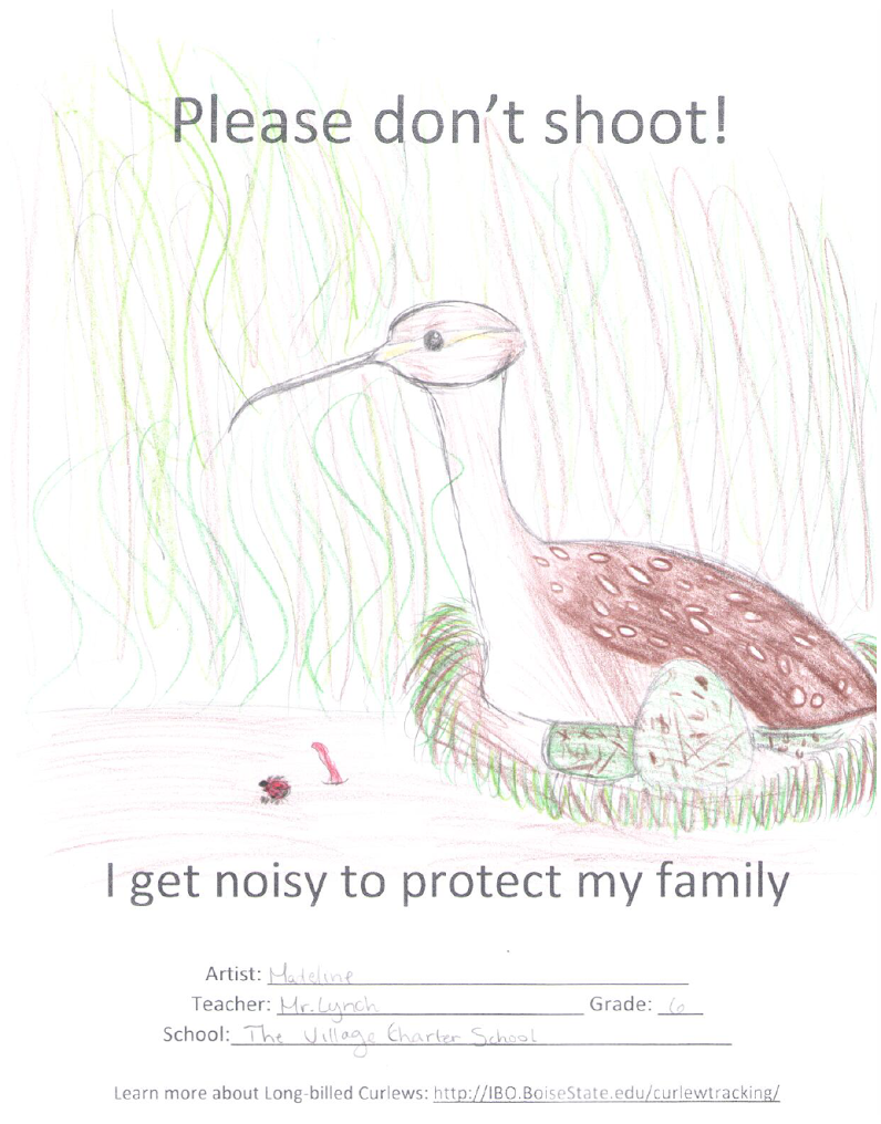 student art curlew poster