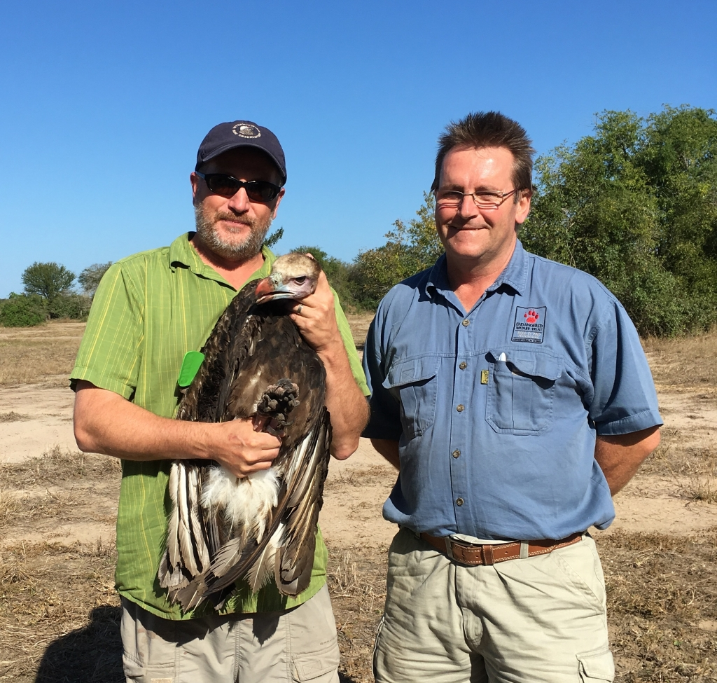 Greg Kaltenecker and Andre Botha with White-headed Vulture