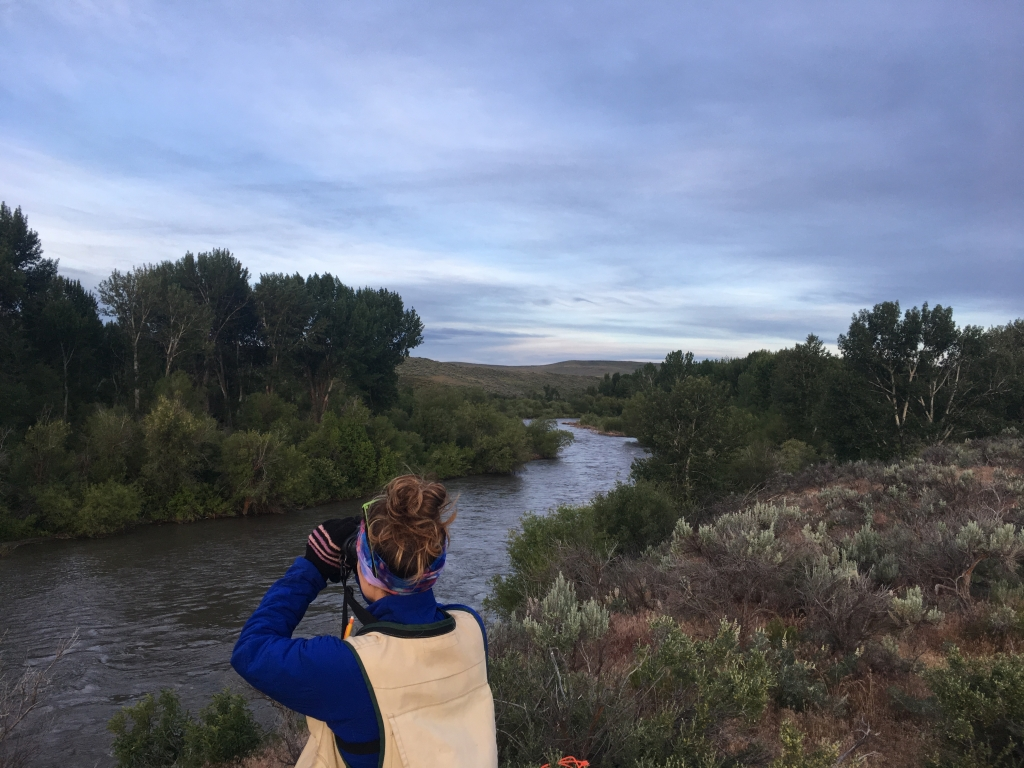 Tempe conducts a Yellow-billed Cuckoo survey