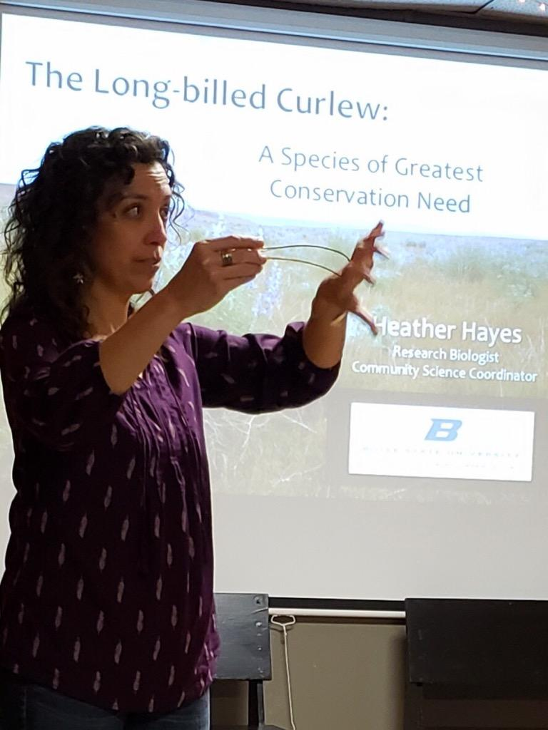 a scientist stands in front of a powerpoint presentation about curlews. She speaks holding a curlew skull to demonstrate their long bills