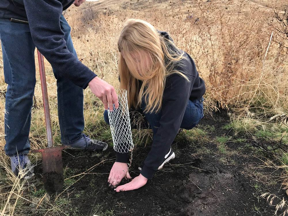 a volunteer places a seedling in the soil