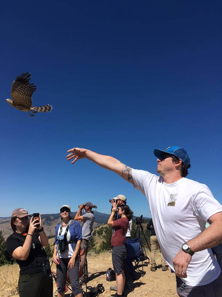 a workshop participant lets a cooper's hawk fly from their open hand
