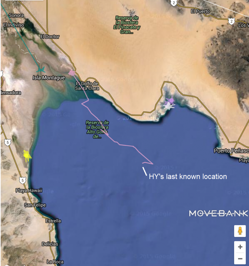 a map with a line that zig zags around a coastal bay before tracking out into blue ocean and stopping