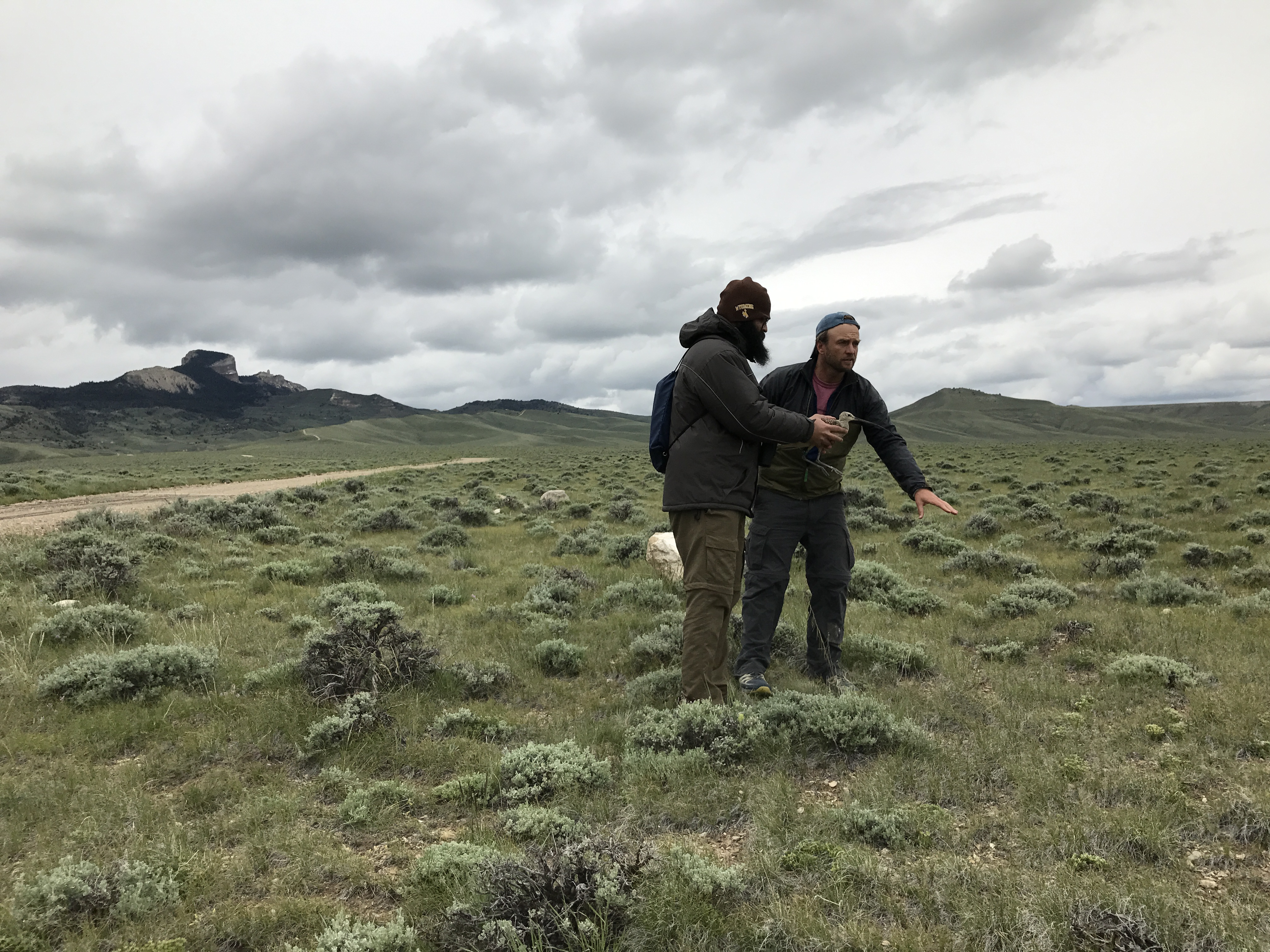 Jay works with Fernando (a Brazilian PhD student at U of WY) to release JT, with scenic Heart Mountain in the background.