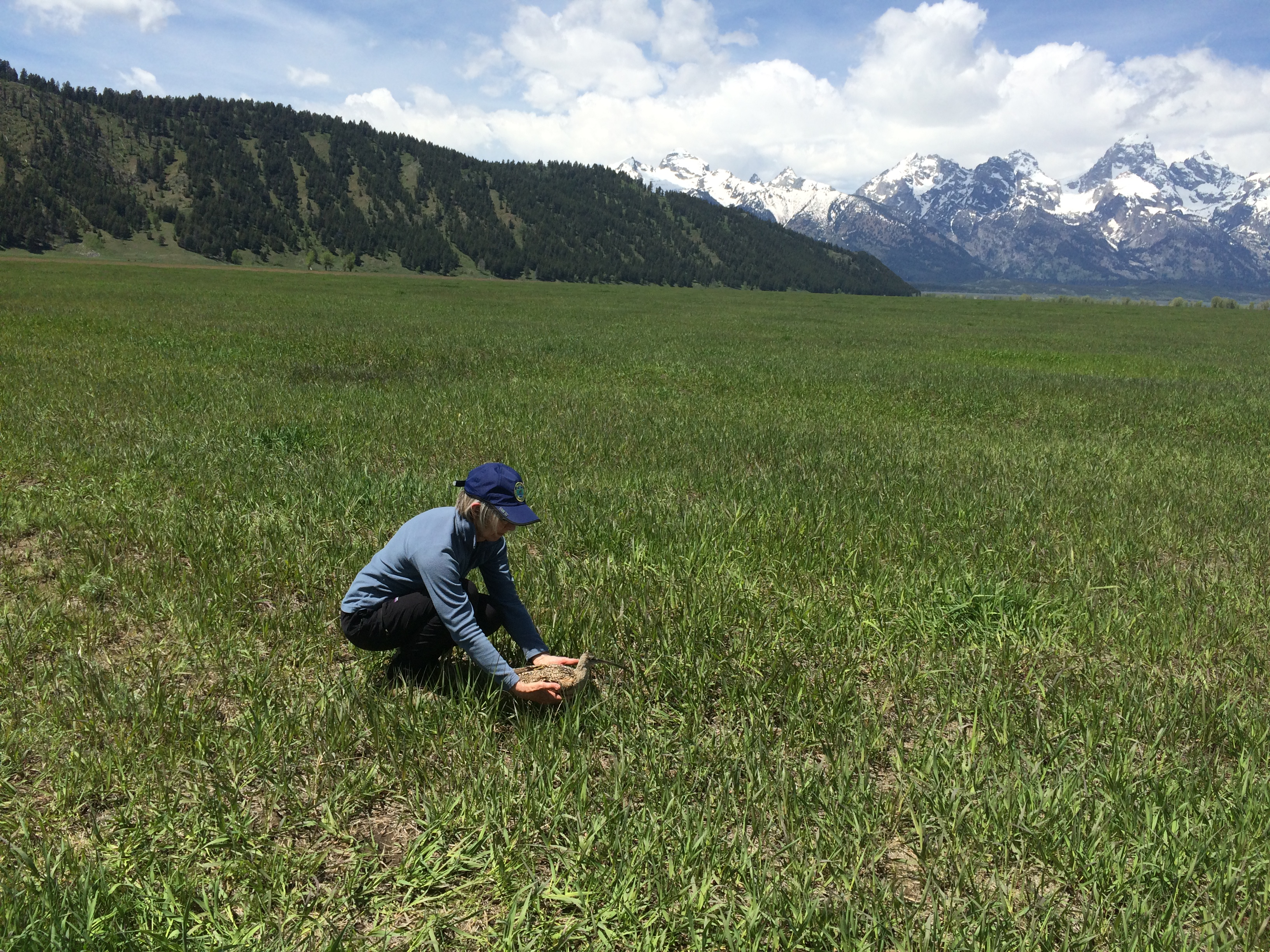a woman holds a curlew and sets it on the ground with green meadows and snowy mountains surrounding