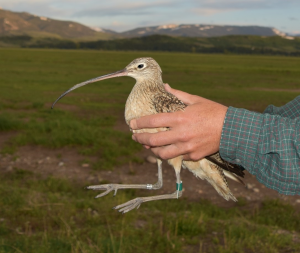 a profile photo for fitbit the curlew