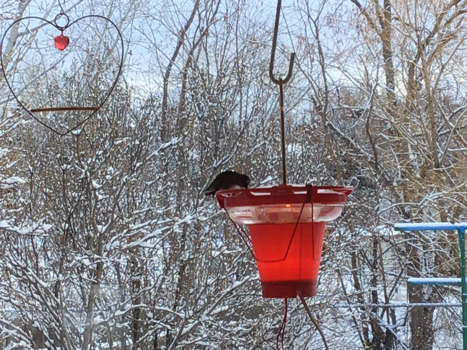 an anna's hummingbird sits on a feeder with a snowy landscape in the background