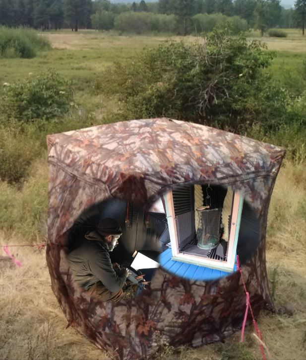 a small camouflage pattern tent sits with door zipped open. a biologist sits inside