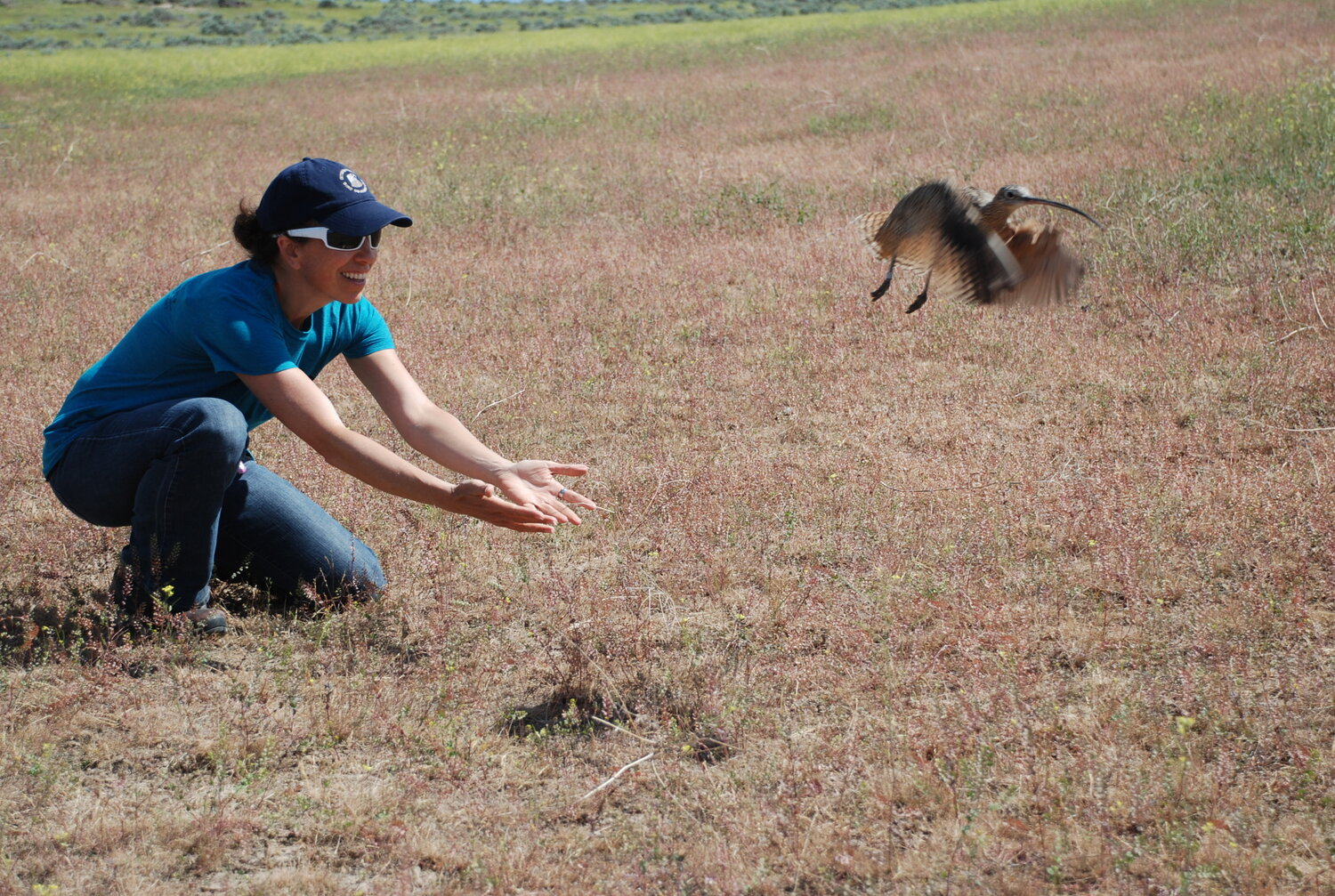 a biologist kneels on the ground with open palms as a Long-billed Curlew flies off