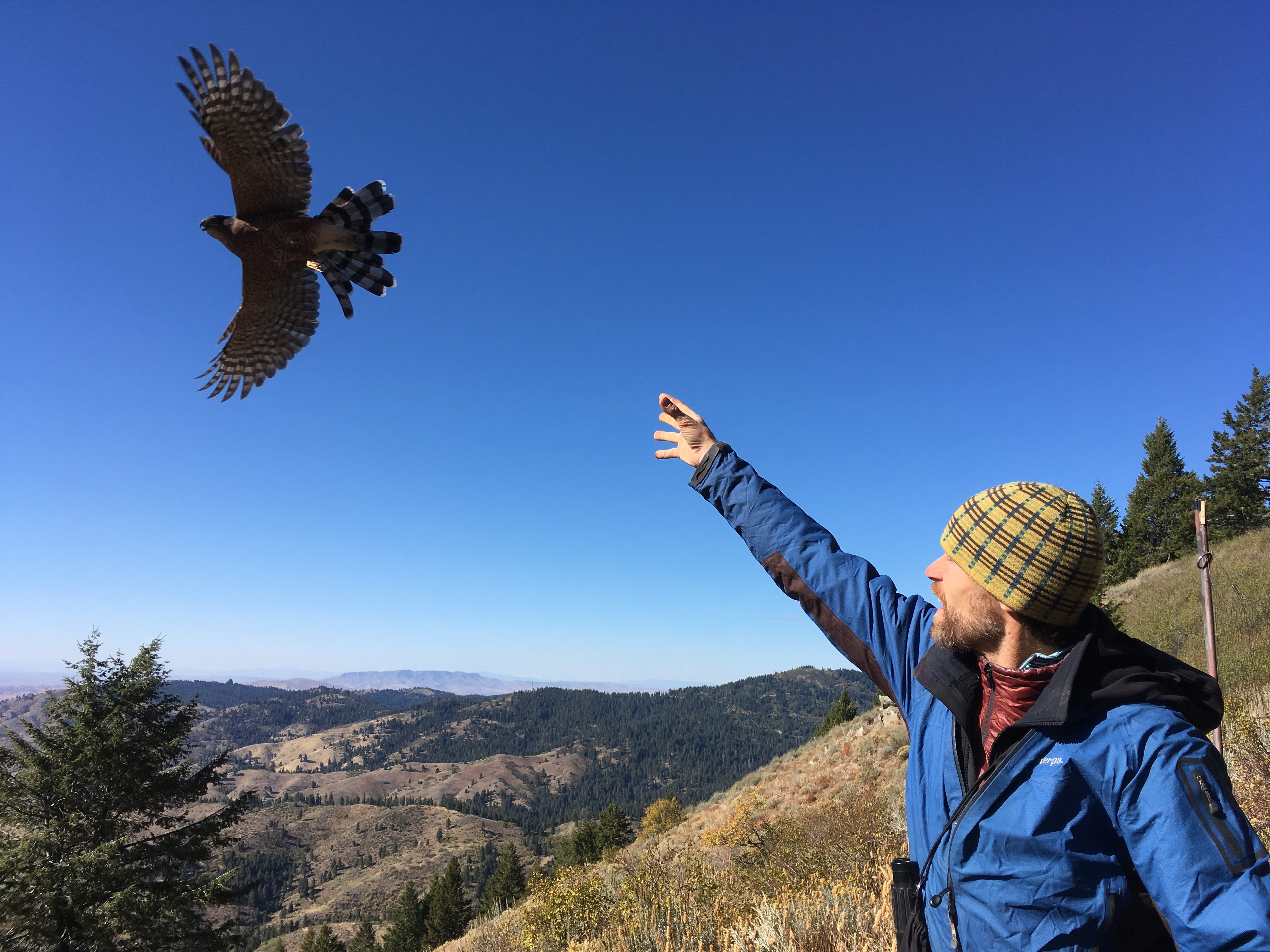 a biologist stands with arm raised and hand open with mountains in the background. A hawk in flight appears above his head