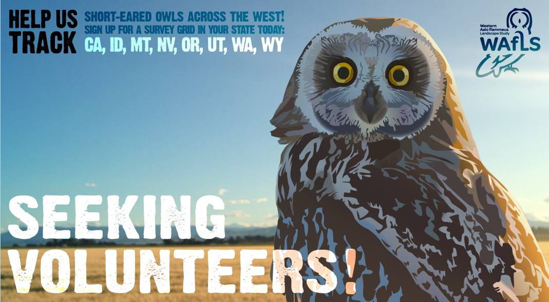 """a poster with a short eared owl re!""""ads """"seeking volunteers"""