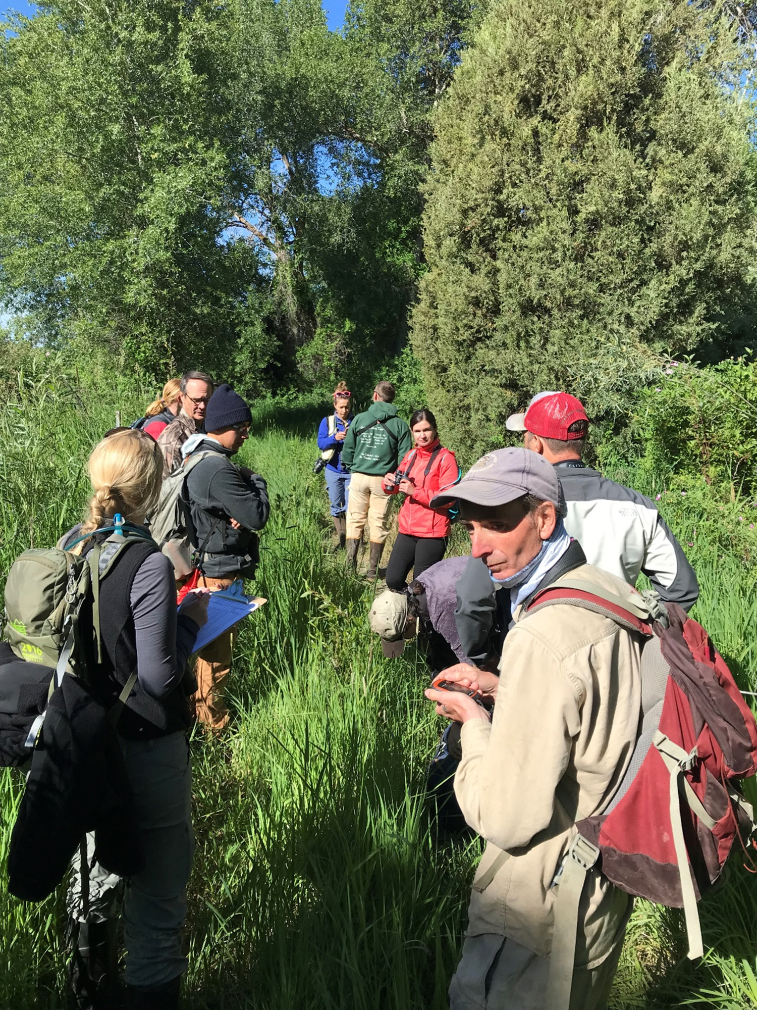 a team of biologists stand in a grassy opening in a grove of cottonwood trees