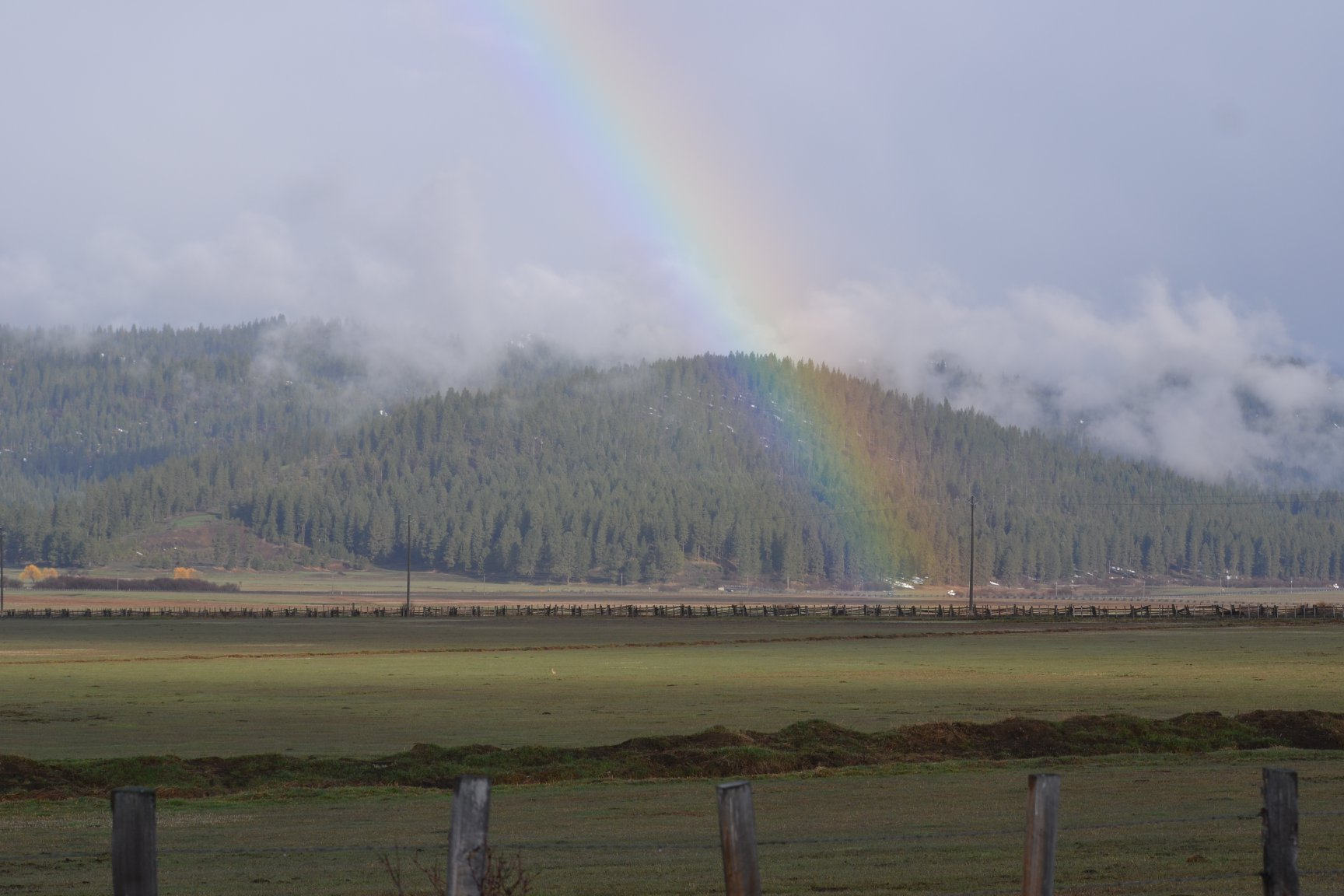 an open grassy meadow with foggy mountains in the background. A rainbow stretches across the sky and a small dot of a Long-billed curlew can be seen walking through the meadow.
