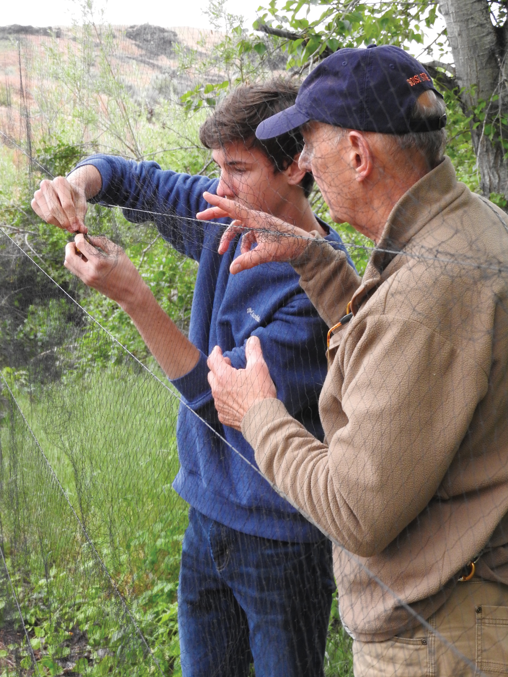 a young student extracts a songbird from a net while an older volunteer teaches over his shoulder