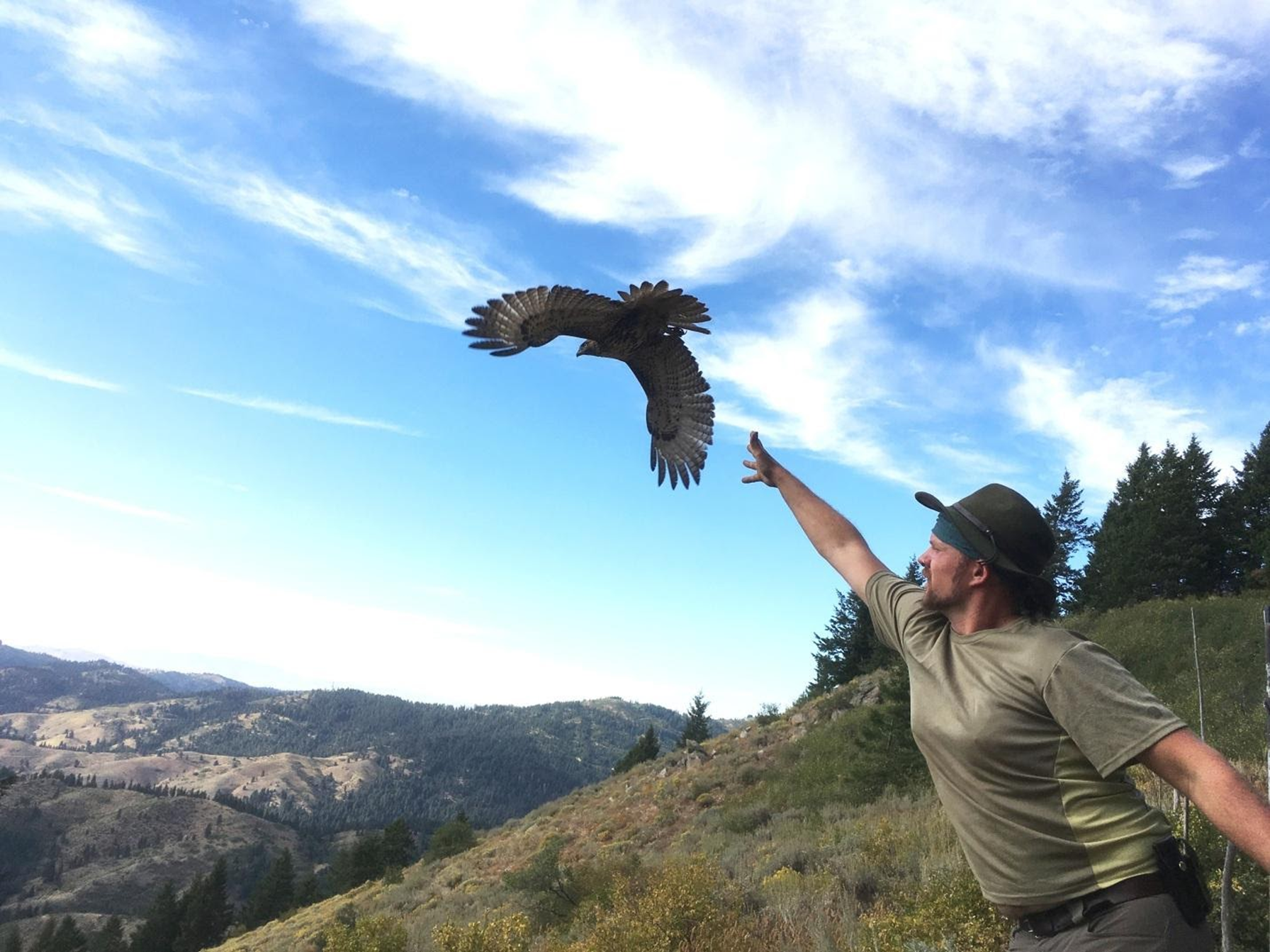 a young biologist stands with his arm outstretched and hand open. a red tailed hawk with wings spread flies away with an expansive blue sky and the Boise mountains in the background