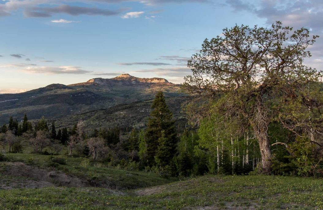 a beautiful scenic view at dawn shows a wide vista with mesa type mountains in the background and a mix of green meadow and conifer trees in the foreground