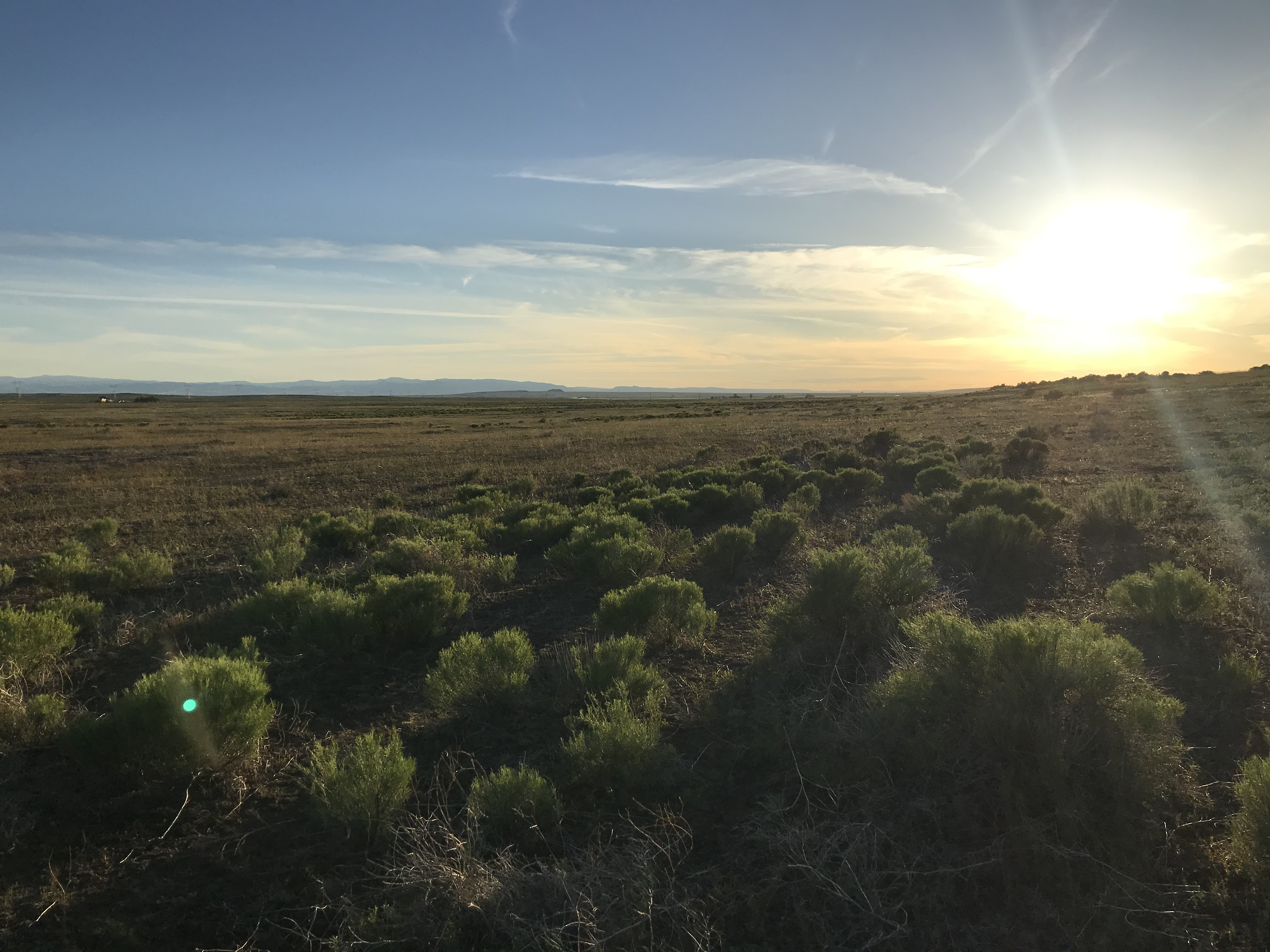 the sun rises over a landscape with rabbit brush shrubs and grasses