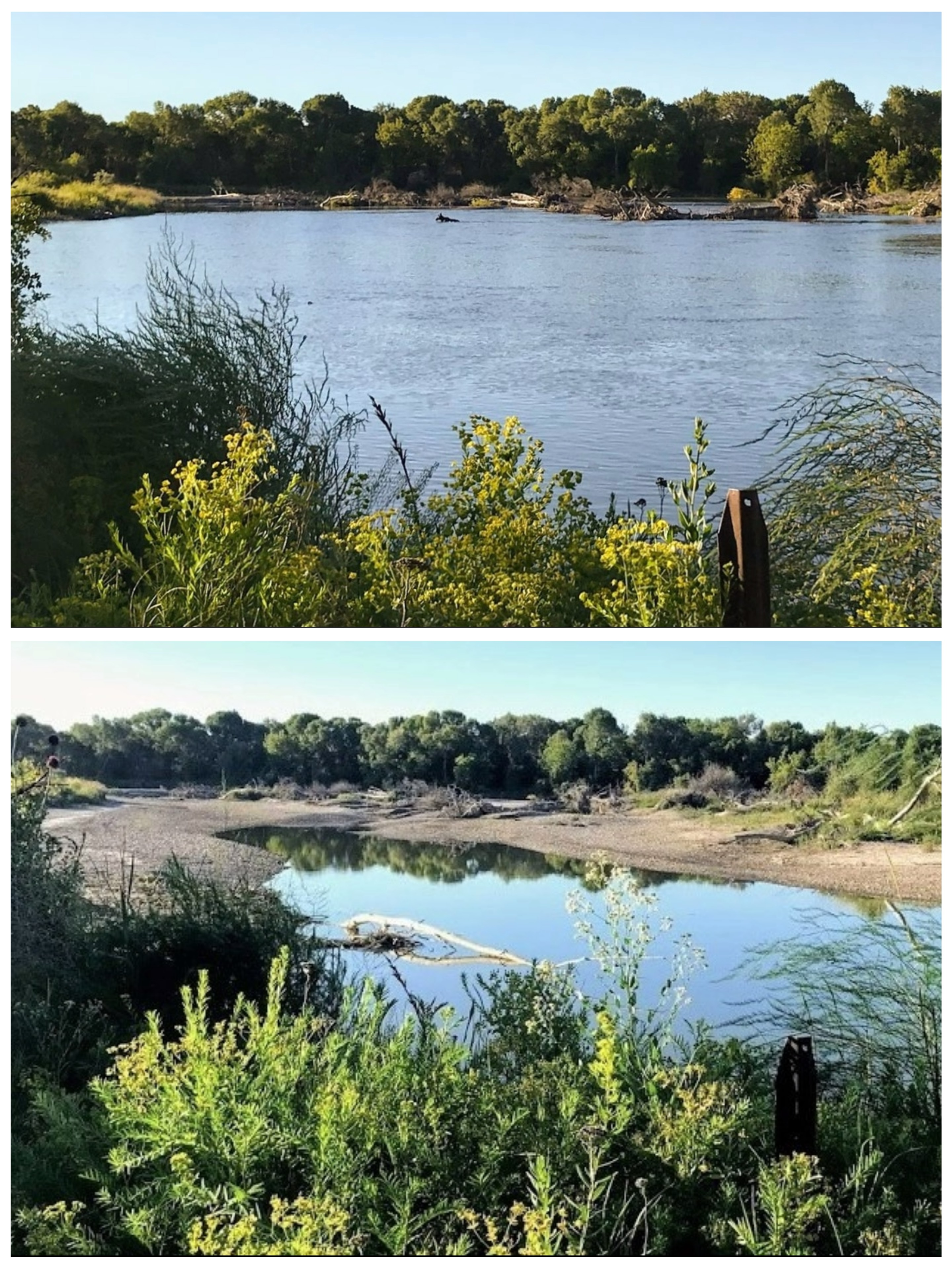 the top photo shows a wide view of a river with a small dot, which is a moose's head sticking above the water. the bottom image shows the same trees, but the view is about half land rather than mostly water