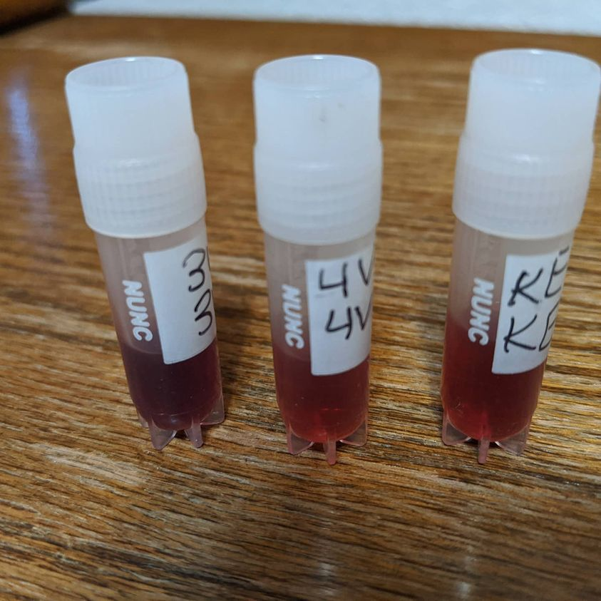 three small vials of blood sit on a desk