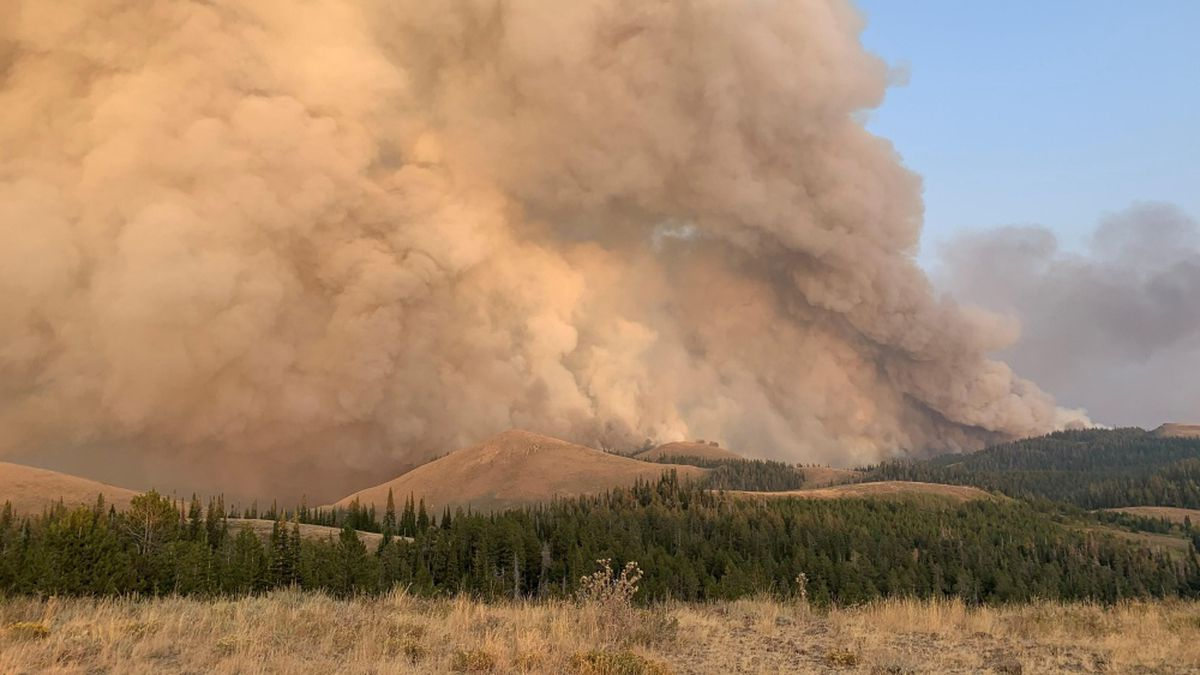 a massive smoke cloud in the sky fills nearly the whole frame of the image, with conifer forest and sagebrush in the foreground
