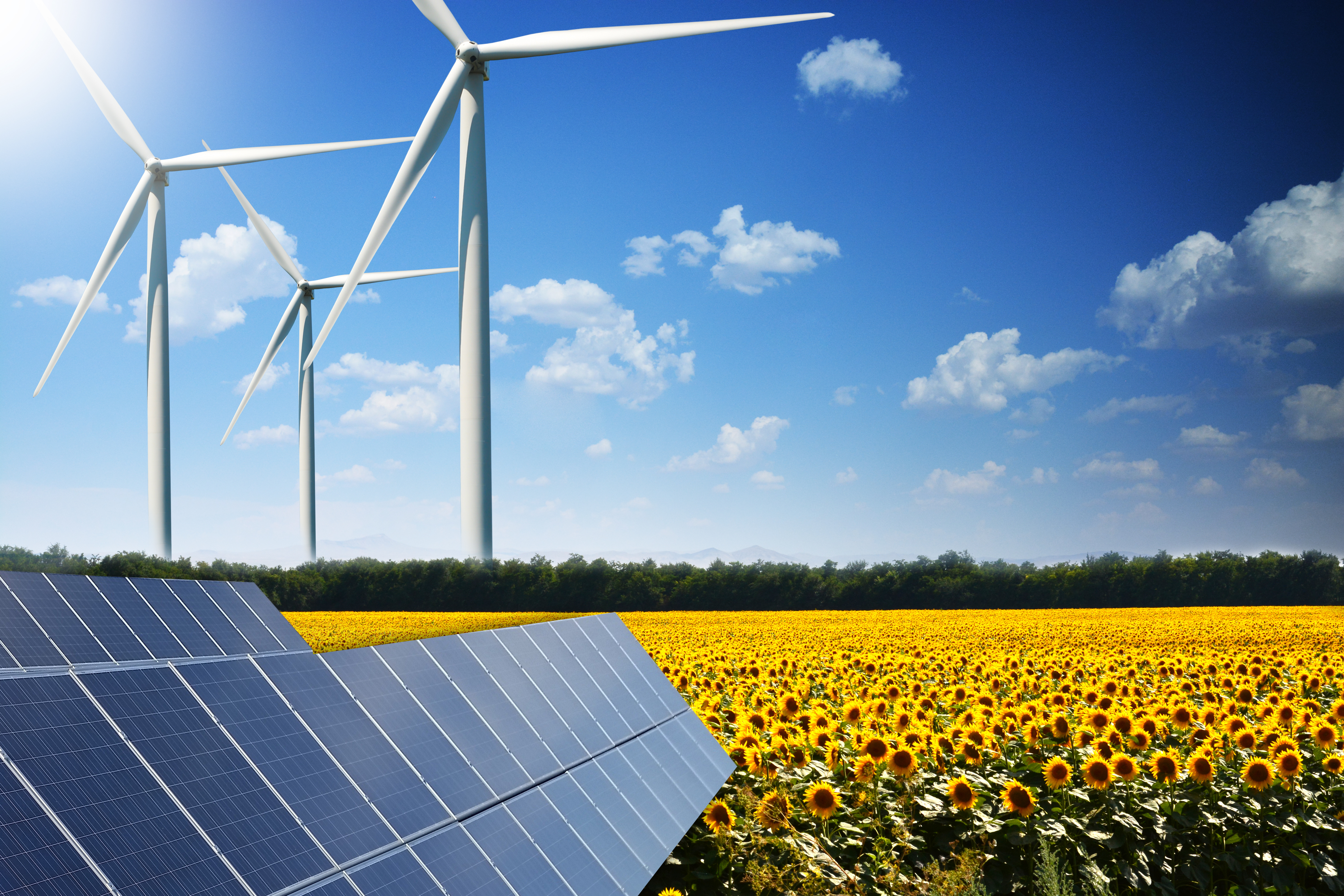 Solar, wind and sunflowers
