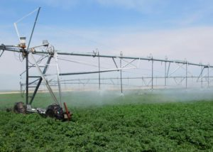 agricultural crops being irrigated by large sprinkler system