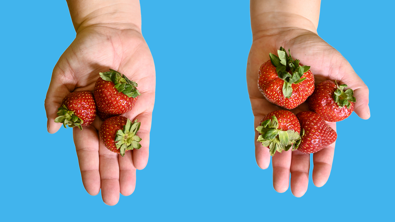 two hands full of strawberries