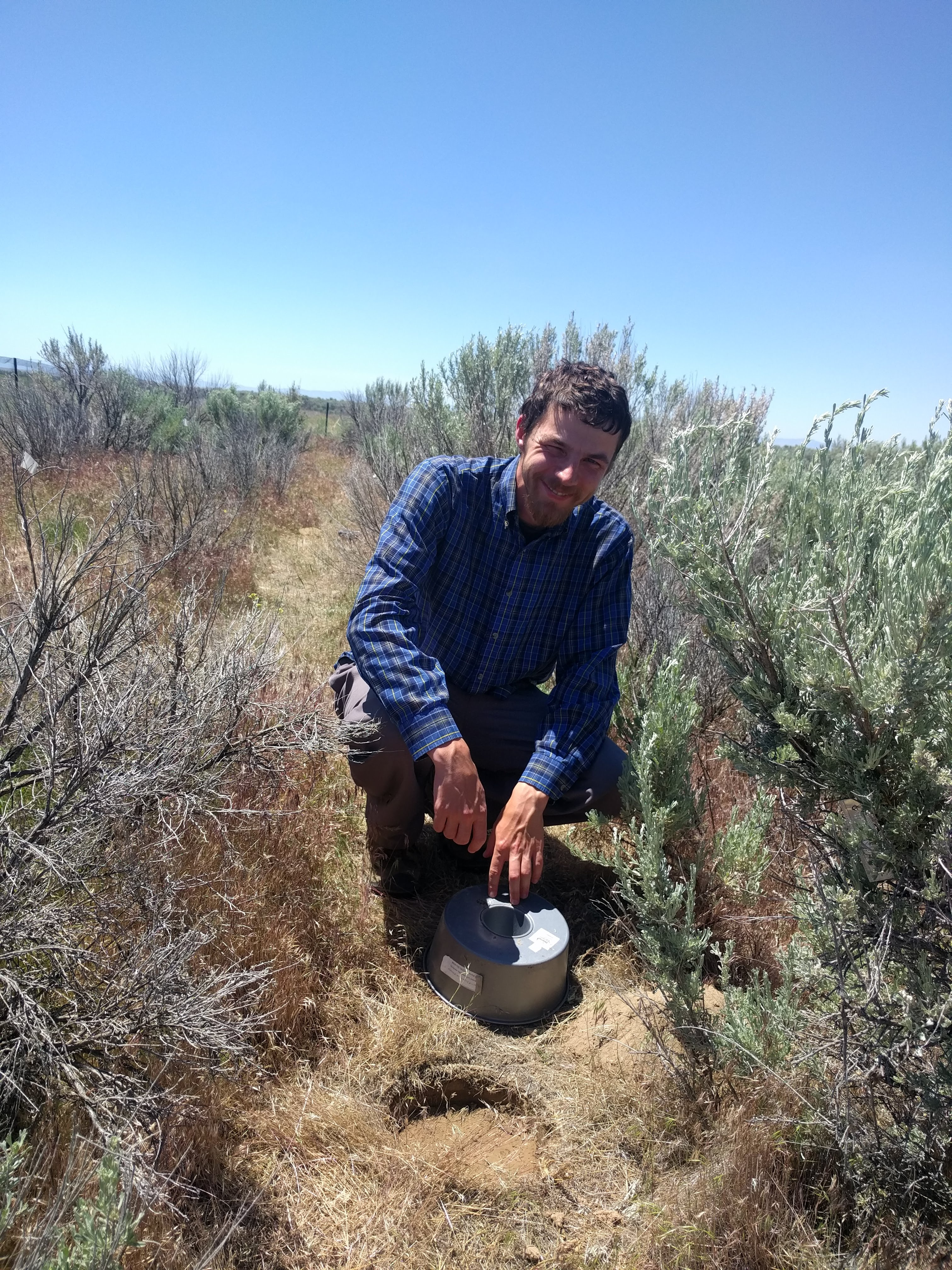 Doctoral student out in the field with sagebrush plant