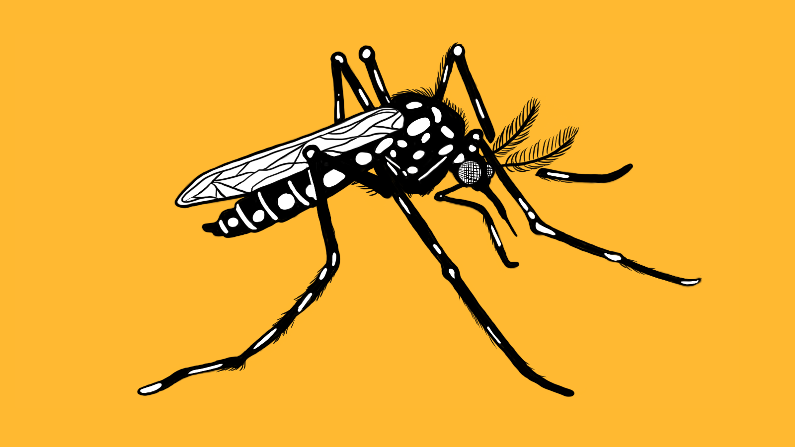 Artistic illustration of yellow fever mosquito