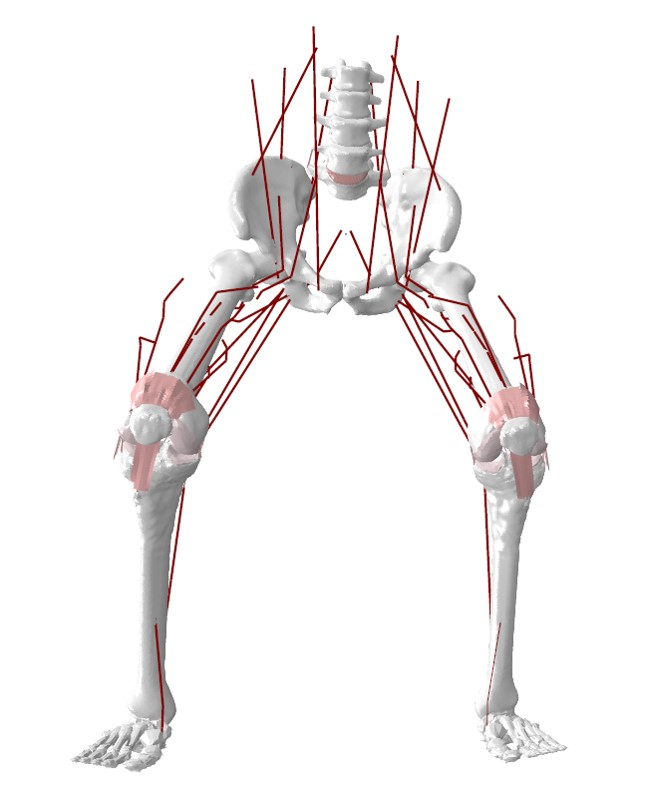 lower limb computational model