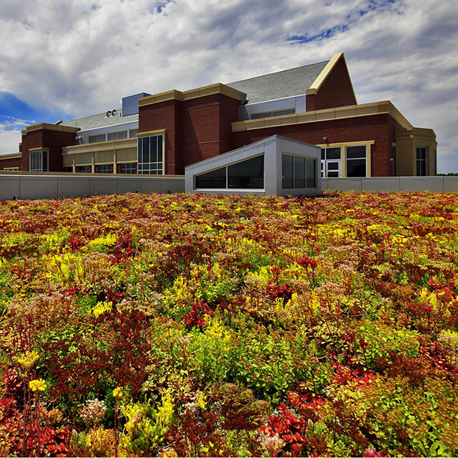 MBEB building living roof