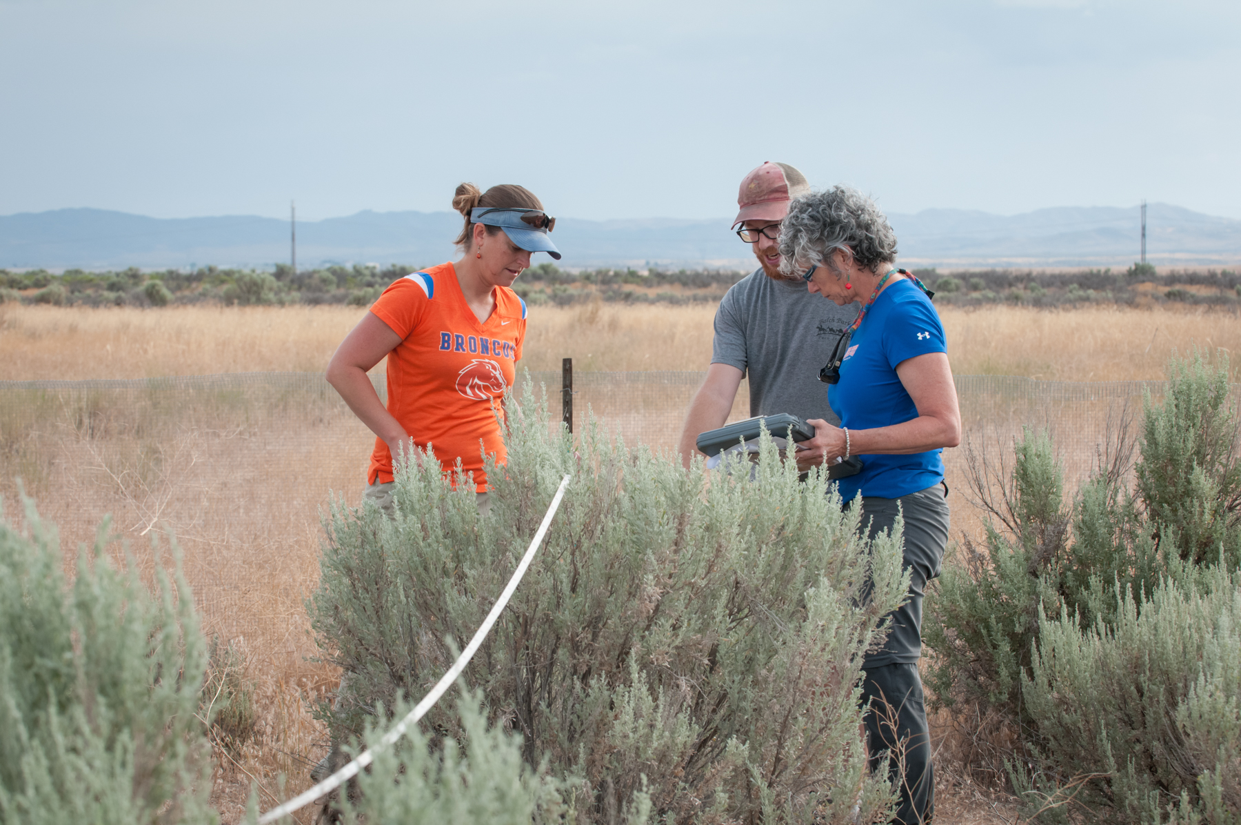 Dr. Jennifer Forbey with other researchers doing field work in a grassy area beside plants resembling sagebrush.