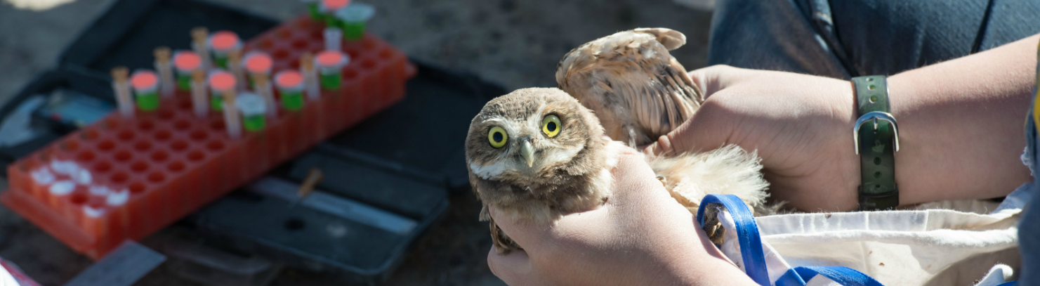 owl being tagged