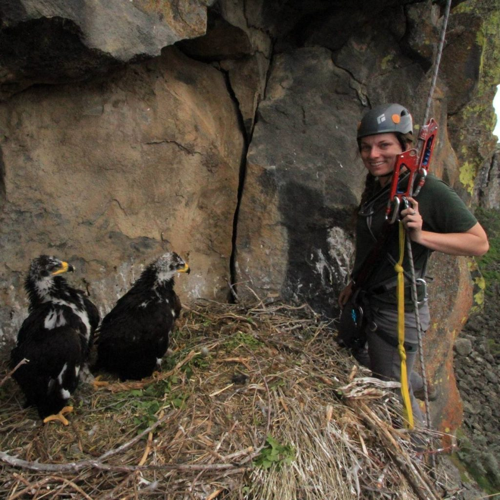 Erin Arnold with two Golden Eagle nestlings.