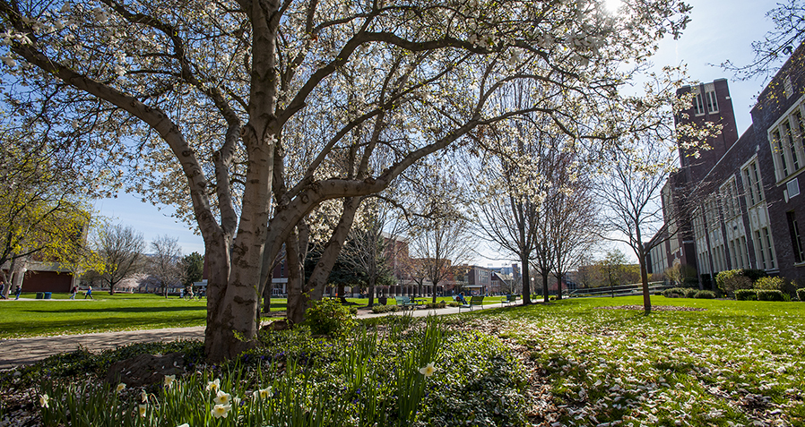 Spring Campus Scenes, flowers, blossoms, trees, landscape